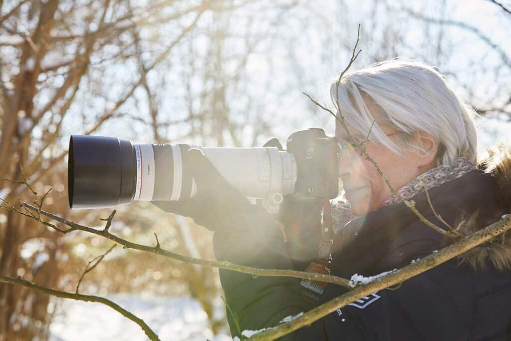 Edelherten fotograferen in de oostvaardersplassen