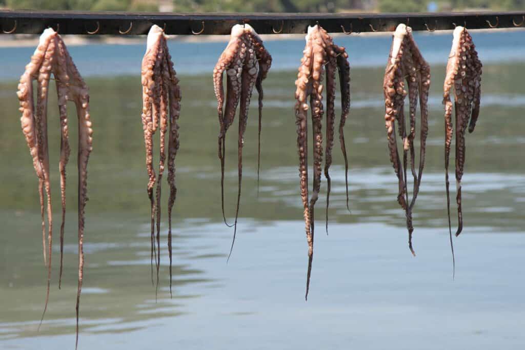 Octopus in Griekenland